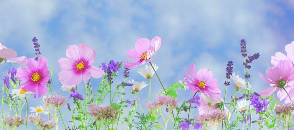 fleurs recette de phil